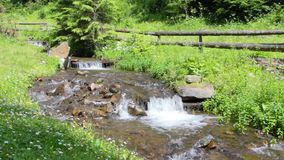 The rapid flow of mountain stream. The rapid flow of pure mountain stream in a green grass stock footage