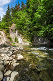 Rapid flow of the river in forest. Beautiful nature background Stock Image