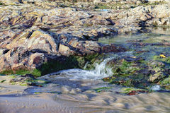 Rapid flow of water through the rocks with algae Royalty Free Stock Photography