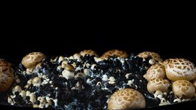 The rapid growth of champignons, time-lapse