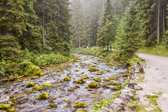 Rapid mountain brook in Koscieliska Valley Royalty Free Stock Image