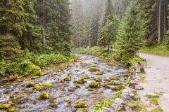 Rapid mountain brook in Koscieliska Valley. Tatras Mountains, Polish National Park Royalty Free Stock Image