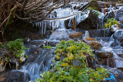 Rapid Mountain Creek and Frozen Icicles Royalty Free Stock Image