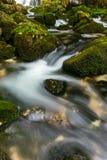 A rapid  mountain creek running deep in a dense forest Stock Photos