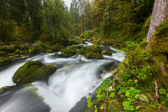 A rapid  mountain creek running deep in a dense forest Royalty Free Stock Photos