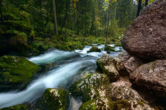 A rapid  mountain creek running deep in a dense forest Stock Photo