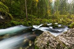 A rapid  mountain creek running deep in a dense forest Royalty Free Stock Photography