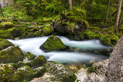 A rapid  mountain creek running deep in a dense forest Stock Images