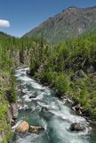 Rapid mountain river. Mountain view with river and forest (2-shots panorama Royalty Free Stock Photo