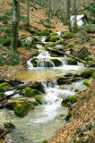 Rapid mountain river Royalty Free Stock Photography