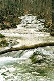 Rapid mountain river. In the autumn forest stock images