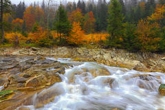 Rapid mountain river in autumn. Colorfull wood background Stock Image