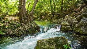 Rapid Mountain River Flowing Among Rocks In Green. Picturesque scenery - mountain river peacefully flowing and raging in green forest among trees and rocks stock video
