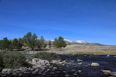 Rapid mountain river in Mongolian Altai Stock Images