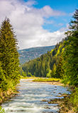 Rapid mountain river in valley. Rapid stream with rocky shore flow through valley. conifer fores on the hillsides of mountains on a sunny day. beautiful Stock Photography