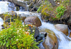 Rapid mountain stream Royalty Free Stock Images