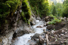 Rapid mountain stream. Mountain stream in the Carpathians Royalty Free Stock Photo