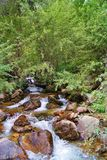 Rapid mountain stream. Flows down the noise the water clean cold rocky riverbed boulders slippery stones Stock Images