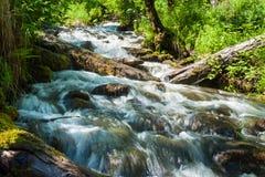 Rapid mountain stream. Trekking in the Altai Mountains Stock Photos