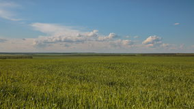 Rapid movement of clouds in the spring over wheat fields in the endless steppes of the Don. Russia, time lapse. Rapid movement of clouds in the spring over stock footage