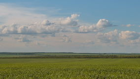 Rapid movement of clouds in the spring over wheat fields in the endless steppes of the Don. Russia, time lapse. Rapid movement of clouds in the spring over stock video footage