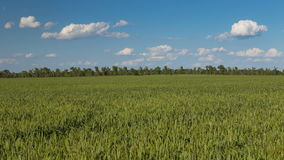 Rapid movement of clouds in the spring over wheat fields in the endless steppes of the Don. stock footage