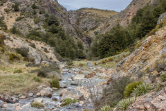 Rapid in Native Bush mountain stream Stock Images