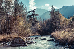 Rapid river in autumn mountains of the Caucasus Stock Image