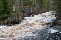 Rapid river. Flowing through the northern forest royalty free stock photography