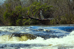 Rapid river in spring Royalty Free Stock Photo