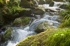 Rapid stream. Through the forest stock images