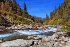 Rapid  stream of coniferous forests Stock Image