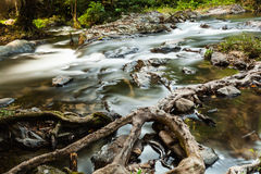 Rapid stream in evergreen forest Royalty Free Stock Photos