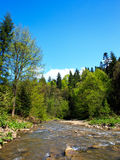 Rapid stream in a forest. In Bieszczady Mountains, Poland Stock Photo