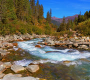 Rapid stream of forests Stock Photo