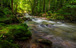 Rapid stream in green forest. Rapid stream flow through ancient green Carpathian forest. stones covered with moss lay on the shore. beautiful nature view in Royalty Free Stock Photos