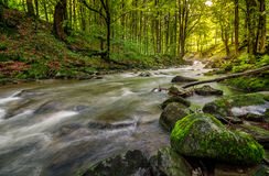 Rapid stream in green forest. Rapid stream flow through ancient green forest. stones covered with moss lay on the shore. beautiful nature view in summer time Stock Image