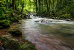 Rapid stream in green forest. Rapid stream flow through ancient green forest. stones covered with moss lay on the shore. beautiful nature view in summer time Royalty Free Stock Photos