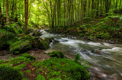Rapid stream in green forest. Rapid stream flow through ancient green forest. stones covered with moss lay on the shore. beautiful nature view in summer time Royalty Free Stock Images