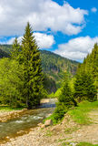 Rapid stream in green forest. Rapid stream with rocky shore flow through valley. conifer fores on the hillsides of mountains. beautiful springtime nature view in Stock Image