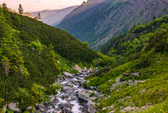 Rapid stream in mountains at sunrise. Rocky shore among green forest. beautiful carpathian landscape royalty free stock images