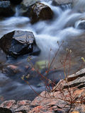 Rapid stream with rocks and willow Royalty Free Stock Image