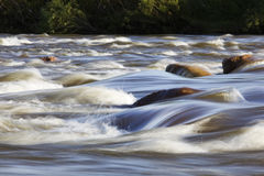 Rapid torrential river Royalty Free Stock Photos