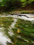 Rapid water stream in forest Royalty Free Stock Photos
