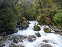 Rapide dell'acqua bianca in Fiordwood, Nuova Zelanda Fotografia Stock