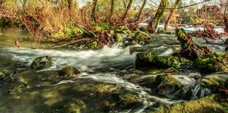 rapids Fotografia Stock