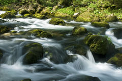 Rapids. With stones and moss in austria Royalty Free Stock Photography