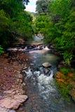 Rapids da água Fotografia de Stock Royalty Free