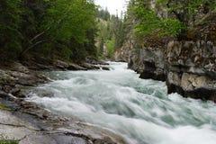 Rapids de fleuve images libres de droits
