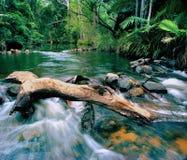 Rapids de fleuve de région sauvage Photo libre de droits